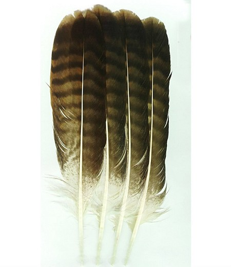 Grade A Turkey Feathers/Plumas de Pavo